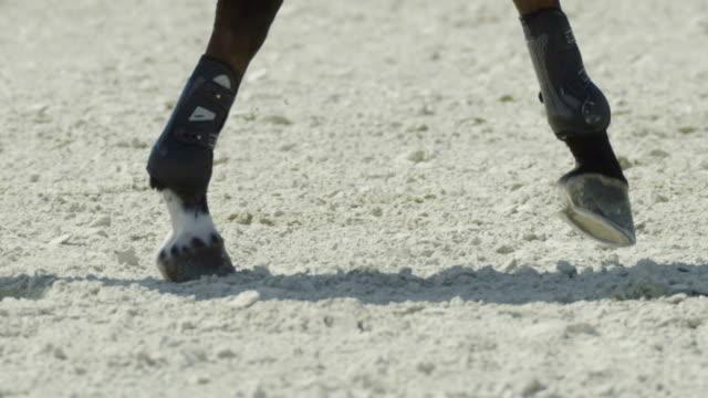 Equitation - gallop