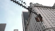 Establishing shot of pigeons perched on a New York City lamp post.