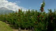 Europe's best apple growing areas, south tyrol