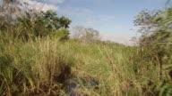 WS POV Everglades National Park / Fort Lauderdale, Florida, United States