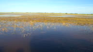 HD: Everglades National Park From The Airboat