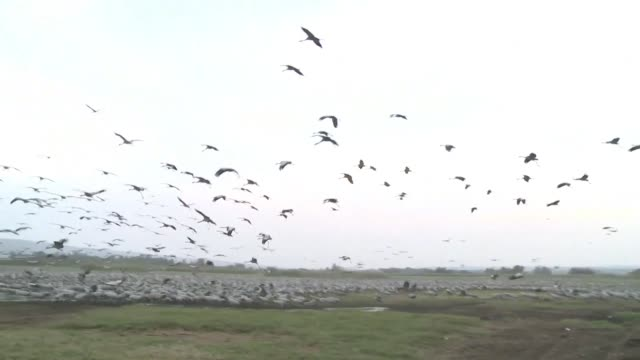 Every year during migration season tourists and bird enthusiasts flock to the Agamon Hula Ornithology and Nature Park in the heart of northern...