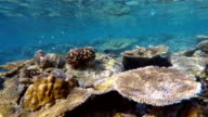 Exotic coral reef on Maldives - South Ari Atoll