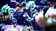 Exotic fishes and corals in Aquarium