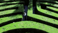 HA Explorers walking through maze of hedges / Veneto, Italy