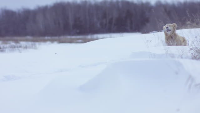 Exploring in the Winter