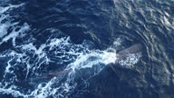 Exterior aerial shots of a whale swimming at sea off the Norwegian coastline on 10 April 2017 at sea
