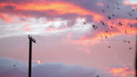Exterior shot birds perched on telephone wires and flying around against a dramatic pink sunset sky on 7th November 2010 in Palm Springs California...