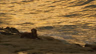 Exterior shots a sunrise over a beach on 26 October in Praia da Luz Portugal