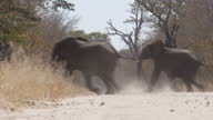 Exterior shots of a herd of elephants crossing a road on the Hwange National Park on August 07 2015 in Hwange Zimbabwe