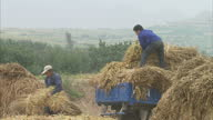 Exterior shots of farmers unloading bundles of millet from a cart and scooping threshed grain into sacks Rural Chinese village and agriculture scenes...