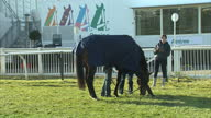 Exterior shots of ForPadydeplasterer horse grazing before Grand National Grand National day at Aintree on April 06 2013 in Aintree England