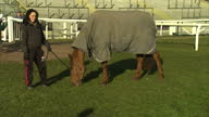 Exterior shots of horse Because I Couldn't See eating grass Because I Couldn't See before Grand National on April 06 2013 in Aintree England