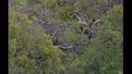 Exterior shots of Kudus grazing on the Sanbona Wildlife Reserve on May 14 2006 in Montagu South Africa