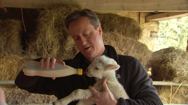 Exterior shots of Prime Minister David Cameron walking with a farmer in Chipping Norton and feeding a lamb with a milk bottle on April 02 2015 in...