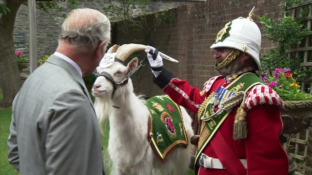 Exterior shots of Prince Charles meeting Shenkin III the Royal Welsh's regimental goat and his handler Goat Major Sgt Mark Jackson and viewing a bomb...