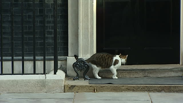 Exterior shots of the Chief Mouser to the Cabinet Office Larry The Cat as he goes about his day outside No 10 Downing Street on April 09 2014 in...