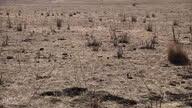 Exterior shots of very dry barren arid land with minimal plantation Dry Californian Drought Land at UC Santa Barbara on January 17 2014 in Santa...