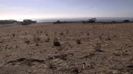Exterior shots of widespread dry barren arid land with minimal plantation Dry Californian Drought Land at UC Santa Barbara on January 17 2014 in...
