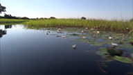 Exterior shots point of view from moving boat along water channels of delta showing wetlands scenery Jao Concession Okevango Delta at Okevango Delta...