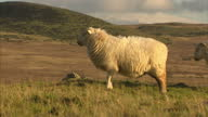 Exterior shots sheep on hills grazing hill farm great shots of sheepLlanfairfechan is a town and community in the Conwy County Borough Wales It lies...