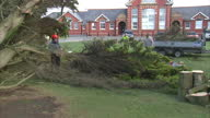 Exterior shots tree surgeon clearing large fallen tree with workmen loading branches into back of trailer on February 13 2014 in Tywyn Wales United...
