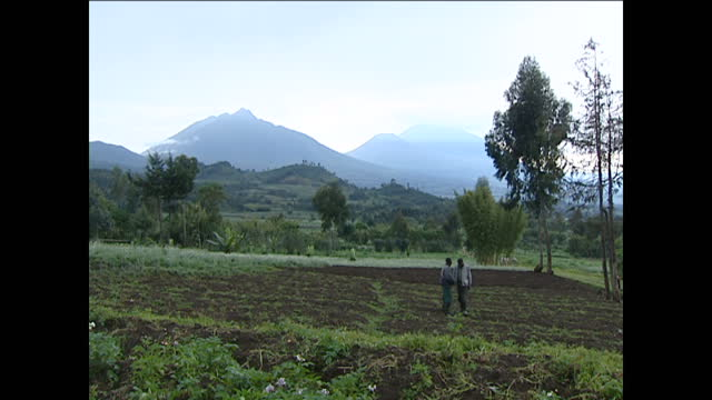 Exterior wide shots of Volcanoes National Park and farmers planting crops on the surrounding hills on October 1 2002 in Rwanda