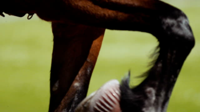 Extreme closeup Harness racing (slow motion)