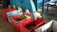 factory Longan fruit.