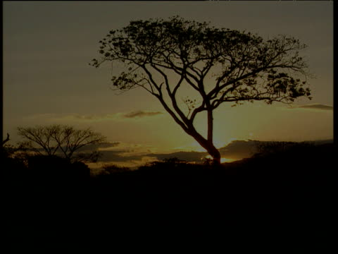 Fade up to silhouetted tree as faded yellow sun sets Colombia