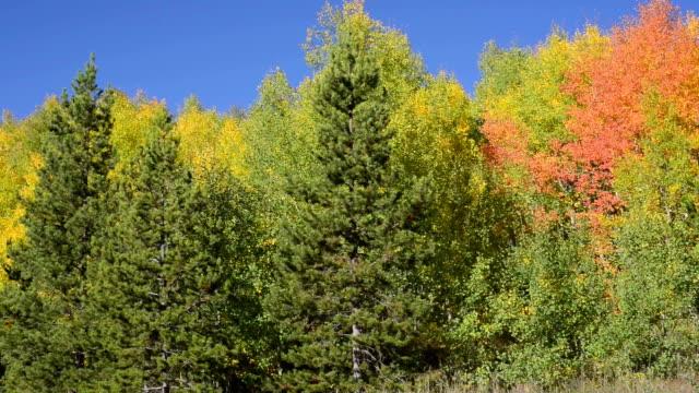Herbst in Aspen und Pine in Summit County, Colorado