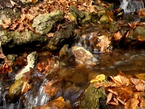 Herbst, Herbst - 01