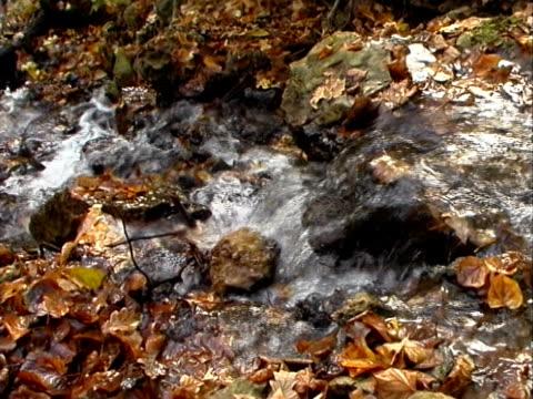 Fall Autumn Water 03