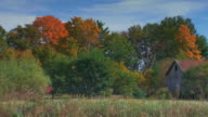Fall colored trees in woods with an old rugged barn