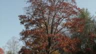 Fall lake in the Blue Ridge Mountains, Virginia, USA