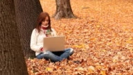 Fall Laptop Young Woman
