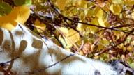 Fall leaves Aspens Steens Mountain Near Malhuer Wildlife Refuge 4
