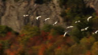 Fall Migration..