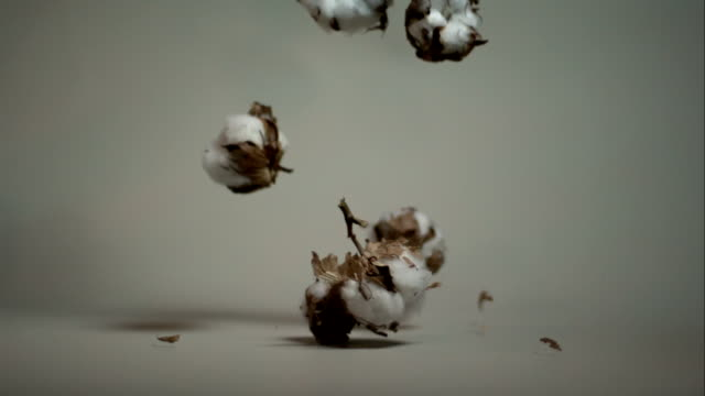 Fall of cotton flowers