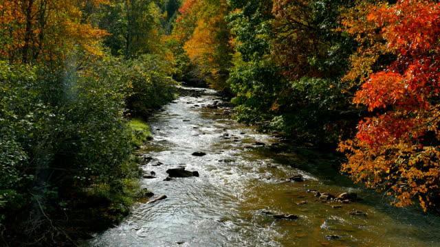 Fall_Stream_HD
