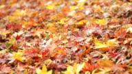CU Fallen autumn leaves / Fukuchiyama, Kyoto, Japan