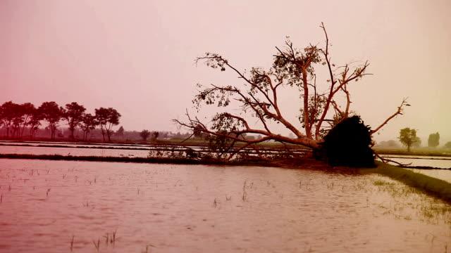 Een omgevallen boom na de orkaan