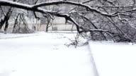 Fallen tree in winter street