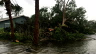 Fallen tree lies in flood water in aftermath of hurricane Irma in Naples Florida