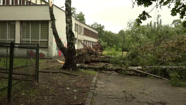 Omgevallen bomen in het park