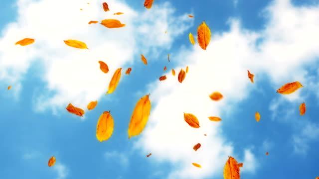 Falling leaves against the sky loop