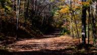 Falling Leaves in Woods