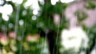 Falling rain and tree backgroun