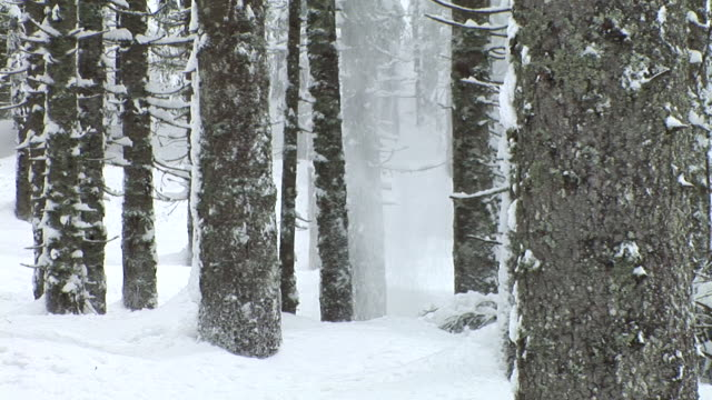 HD: Falling snow