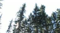 HD: Falling tree